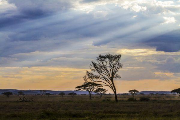 Studenci UAM będą badań sawanny Tanzanii